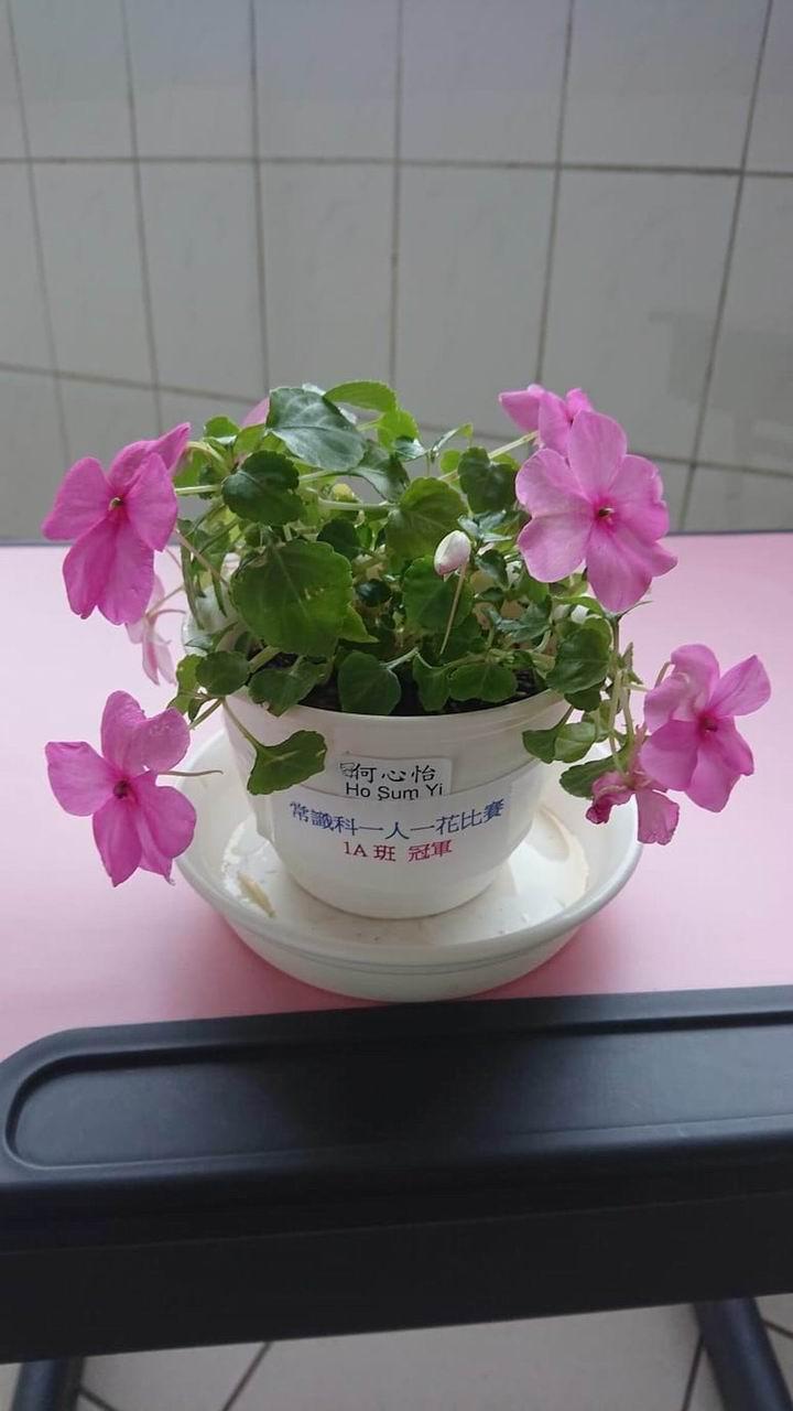 https://www.plkcjy.edu.hk/sites/default/files/diao_zheng_da_xiao_1a_guan_.jpg