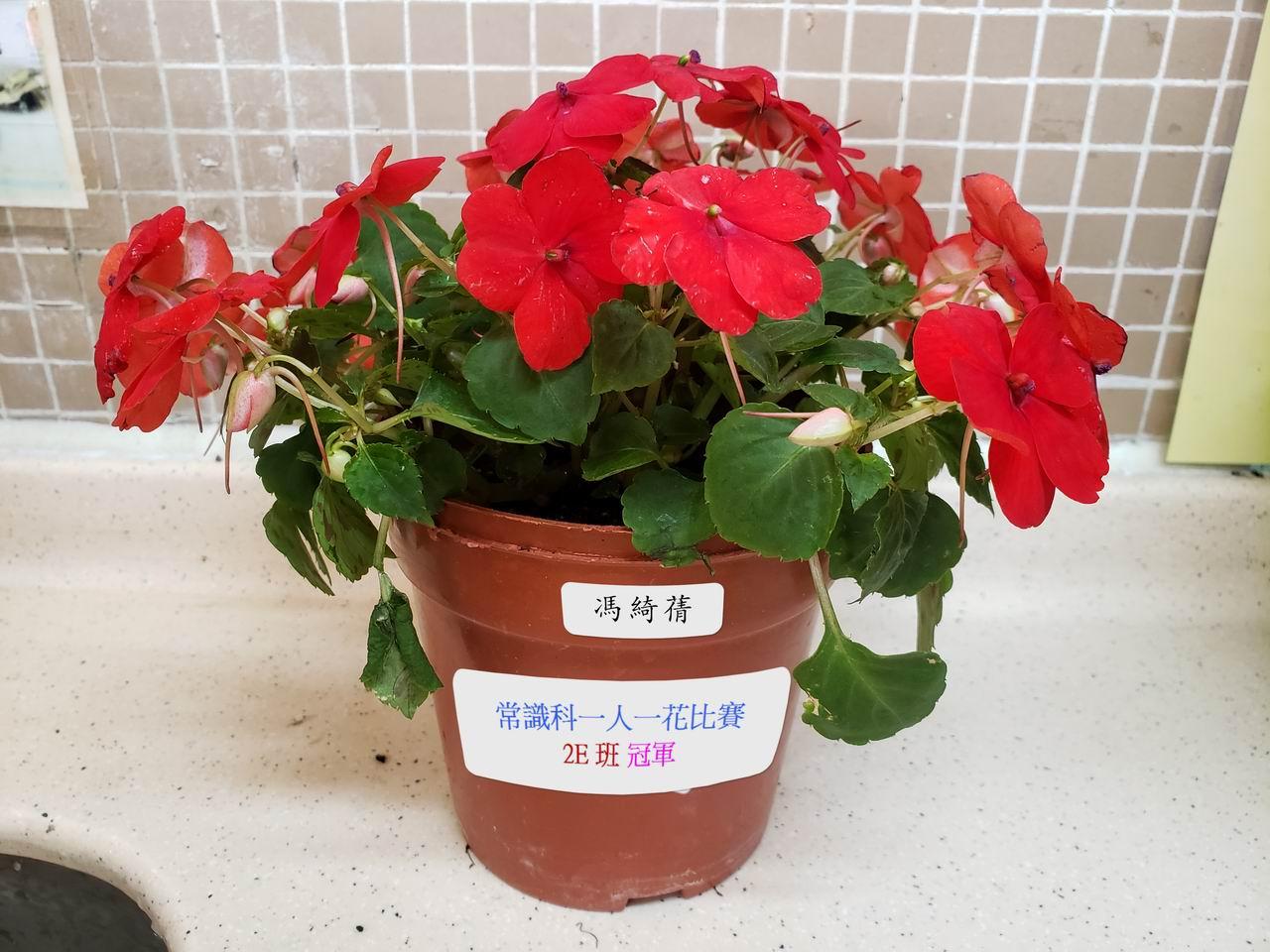 https://www.plkcjy.edu.hk/sites/default/files/diao_zheng_da_xiao_2e_guan_.jpg
