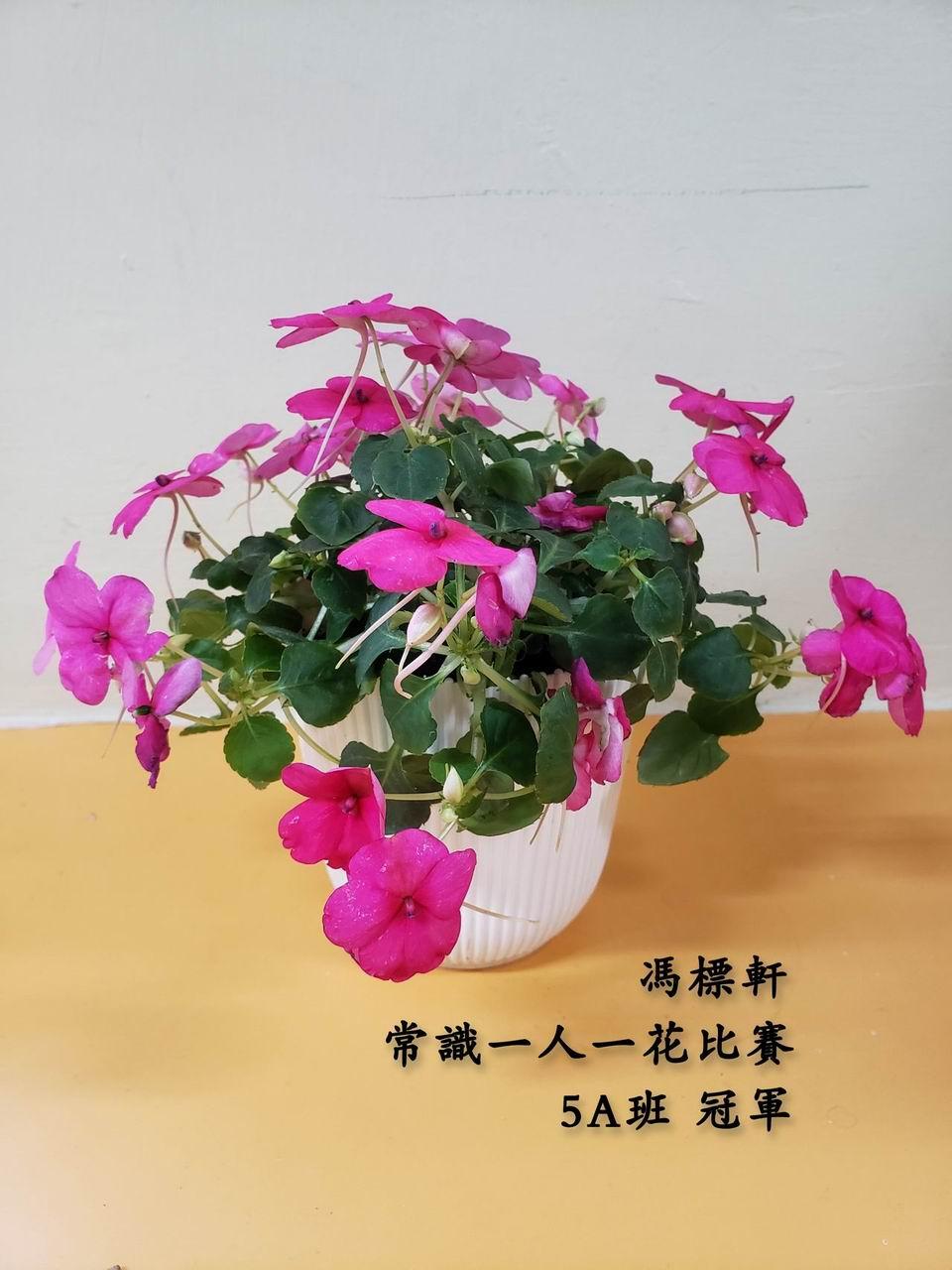 https://www.plkcjy.edu.hk/sites/default/files/diao_zheng_da_xiao_5a_guan_.jpg