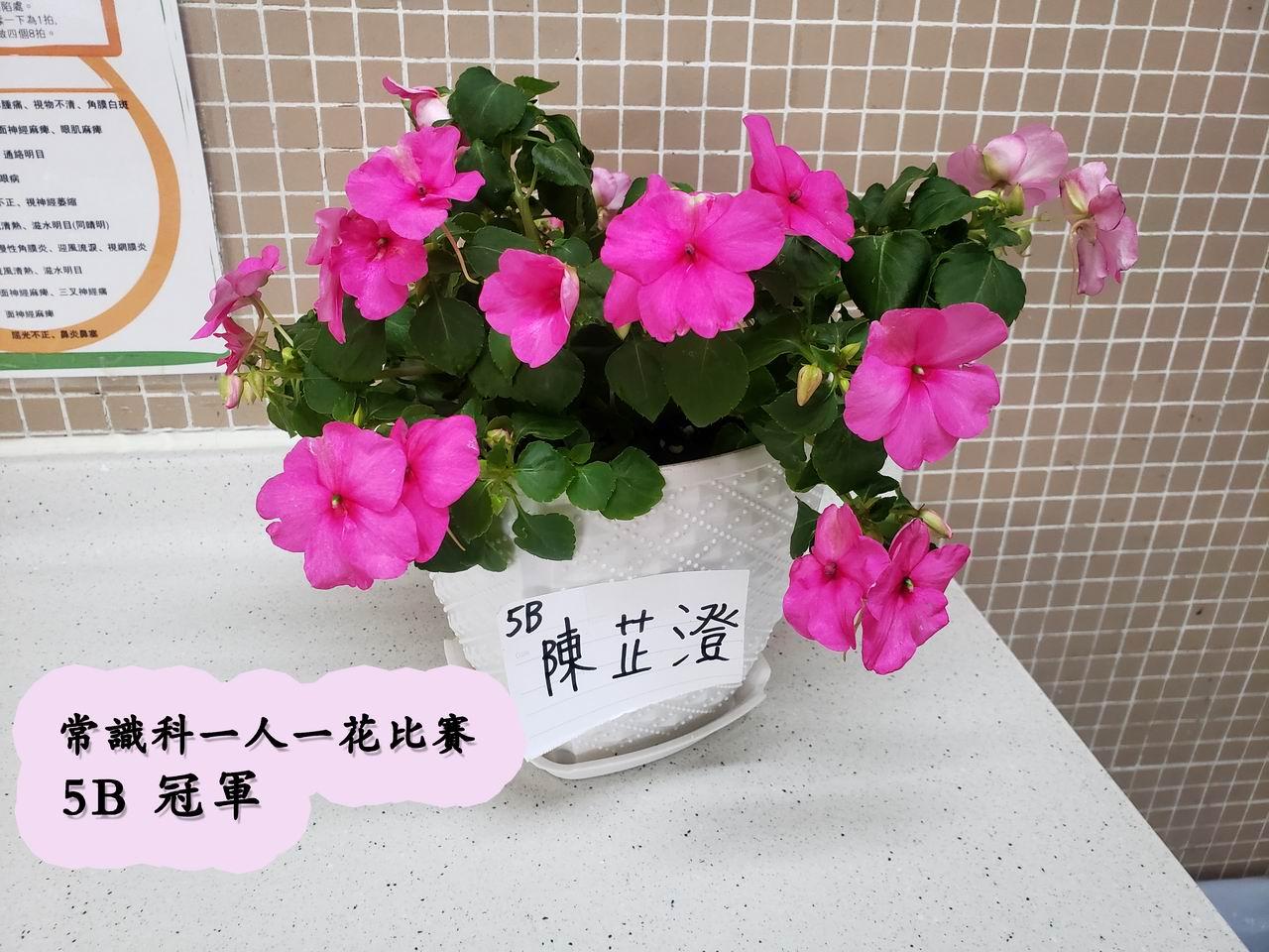 https://www.plkcjy.edu.hk/sites/default/files/diao_zheng_da_xiao_5b_guan_.jpg